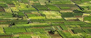 Hrvatska polja, poljoprivreda i gospodarstvo
